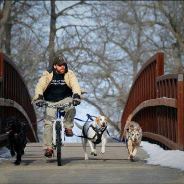 Bert_Bike_Dogs_Bridge_Featured